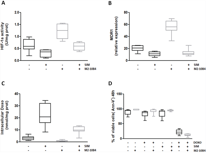 SIM-mediated inhibition of HIF-1α activity and MDR1 gene expression improves Doxo-induced cytotoxicity.