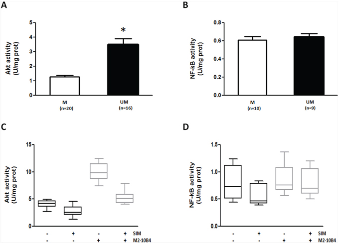SIM effectively counteracts SC-induced Akt upregulation in IGHV UM cells.