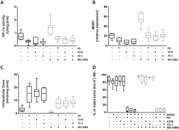Specific inhibitors of RhoA, ERK1–2 and HIF-1α effectively reverse the MDR phenotype of IGHV UM cells.