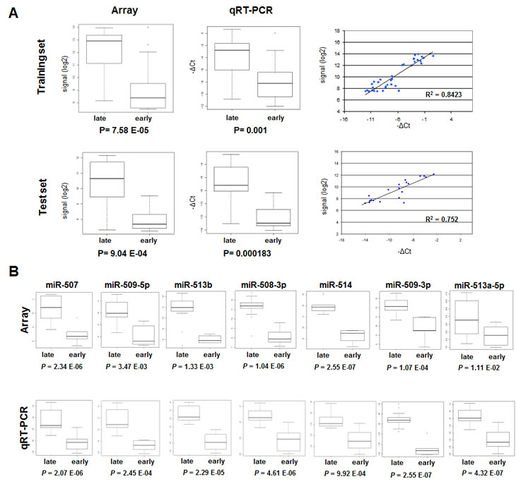 qRT-PCR validation of the chrXq27.3 miRNA cluster.