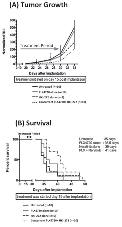 Combined EGFR and BRAFV600E inhibition significantly reduces intracranial BRAF12 DBTRG-FL tumor growth and prolonged animal survival.