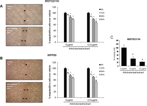 The artichoke leaf extract impairs the migration and invasion of MPM cells.