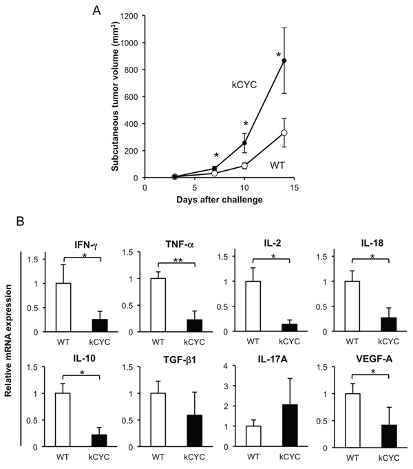 Primary tumor growth of B16 melanoma cells is promoted, while cytokine expression in draining LNs is decreased in kCYC mice.