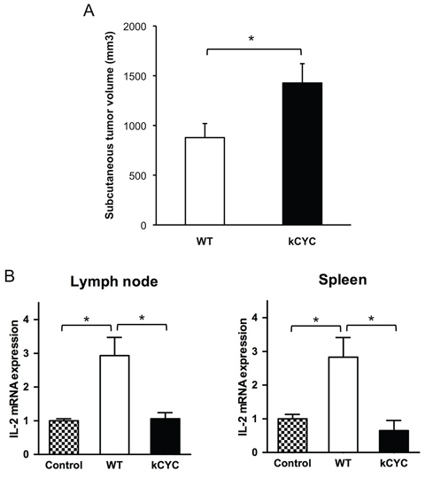 Presentation of tumor antigen is attenuated in kCYC mice.