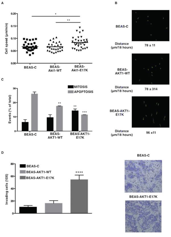 AKT1-E17K promotes motility.