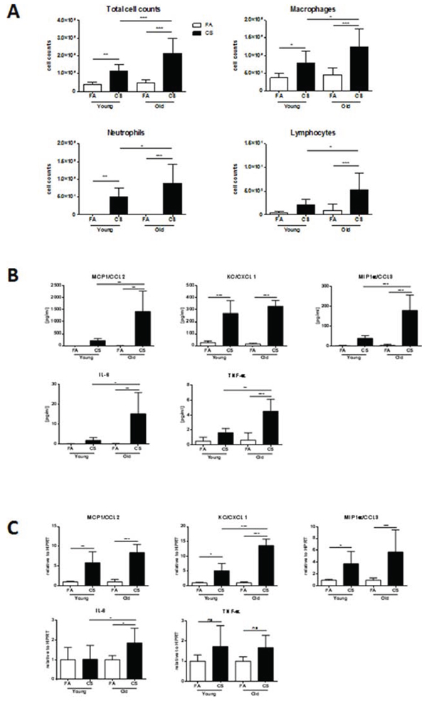 BAL and lung tissue inflammation are increased in aged mice.