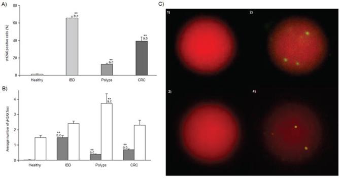 γH2AX immnofluorescence results.