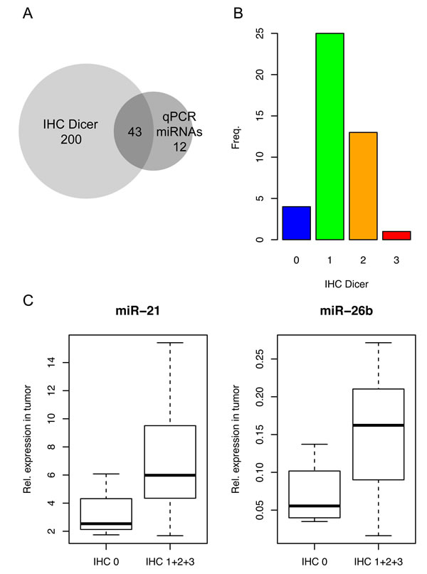 Evaluation of correlations between Dicer staining and miRNA levels.