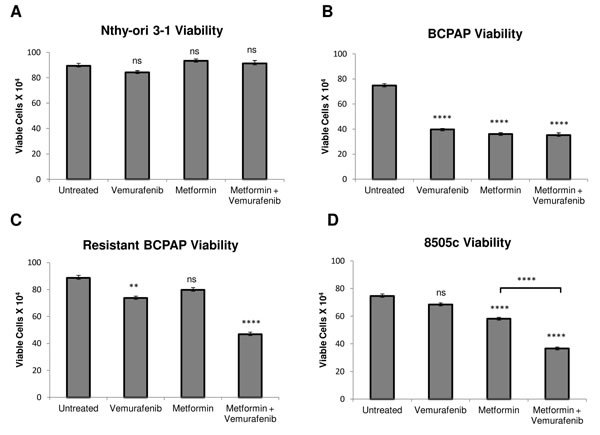 Effects of metformin and vemurafenib on cell viability.