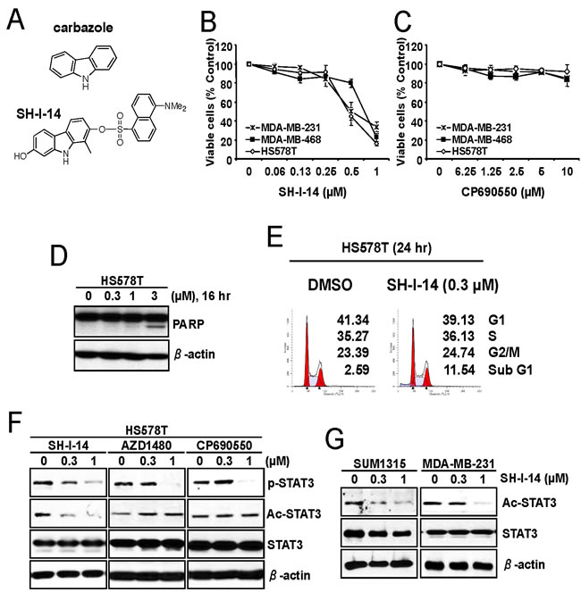 SH-I-14 represses the proliferation of TNBC cells and reduces acetylation of STAT3.