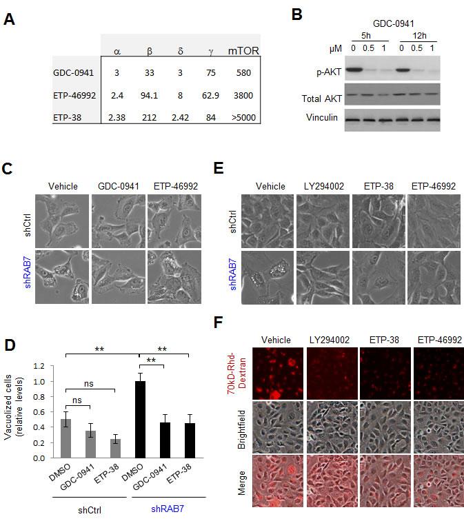 Class I PI3K signaling drives constitutive RAB7-regulated macropinocytosis in melanoma cells.