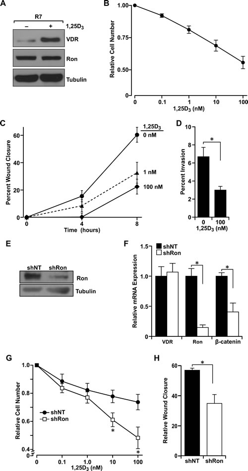 Ron receptor status determines epithelial cell sensitivity to vitamin D