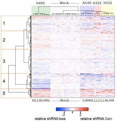 Heatmap of the relative abundance of 3,003 shRNAs in the genomic DNA isolated from mock-treated or GSK461364A-treated lung cancer cell lines.