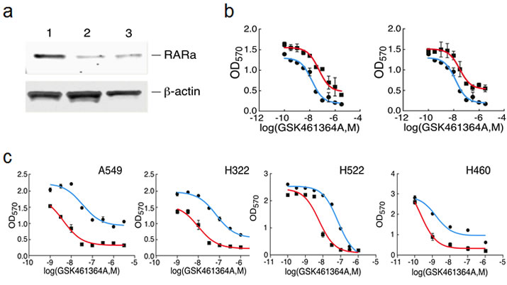 Validation of shRNAs targeting RARA and the effect of retinoids on the response of lung cancer cells to GSK461364A.