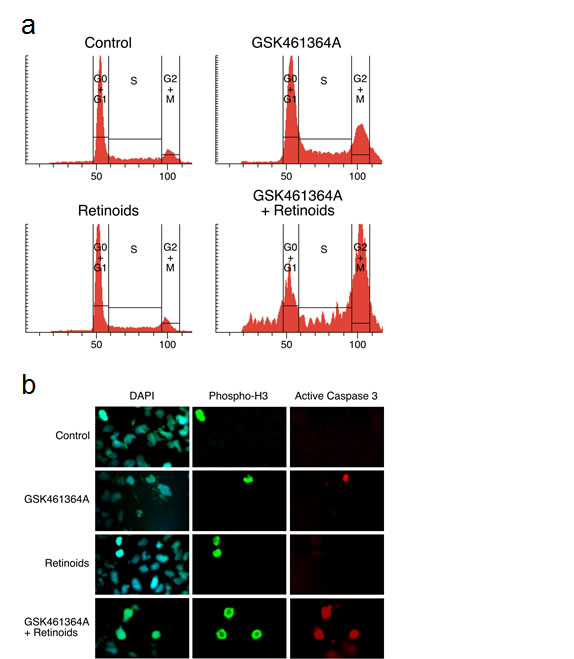 Characterization of the cell cycle arrest and mitosis-associated apoptosis induced by GSK461364A and retinoids.