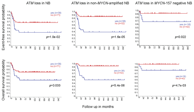 ATM deletion correlates with lower EFS and OS, independently of MYCN amplification.