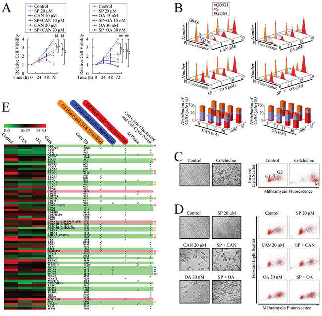 G2/M cell cycle arrest in PANC-1 cells after PP2A inhibitor treatment.