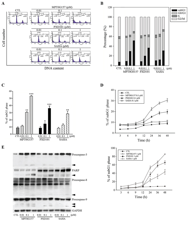 MPT0G157 treatment induced apoptosis in HCT116 cells.