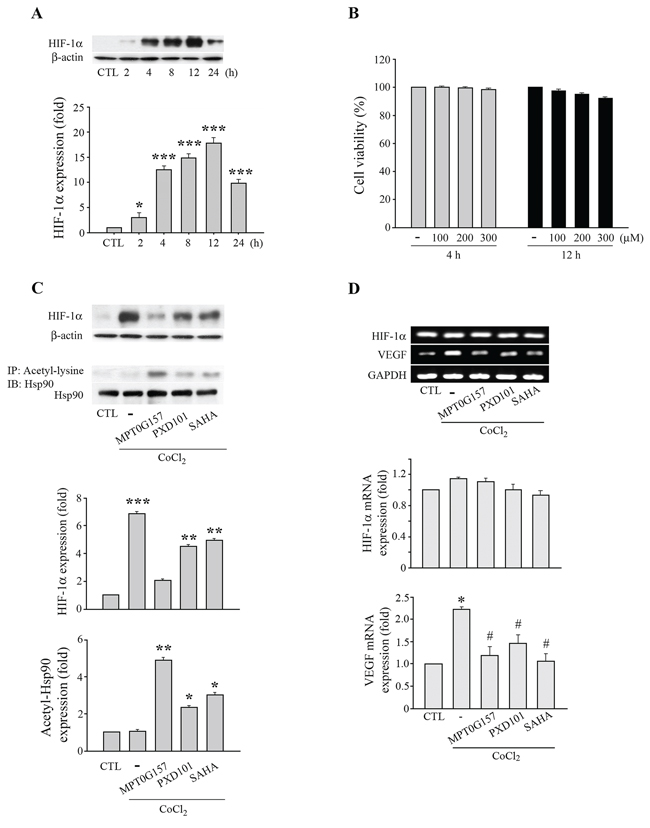 MPT0G157 treatment inhibited HIF-1α expression in HCT116 cells.