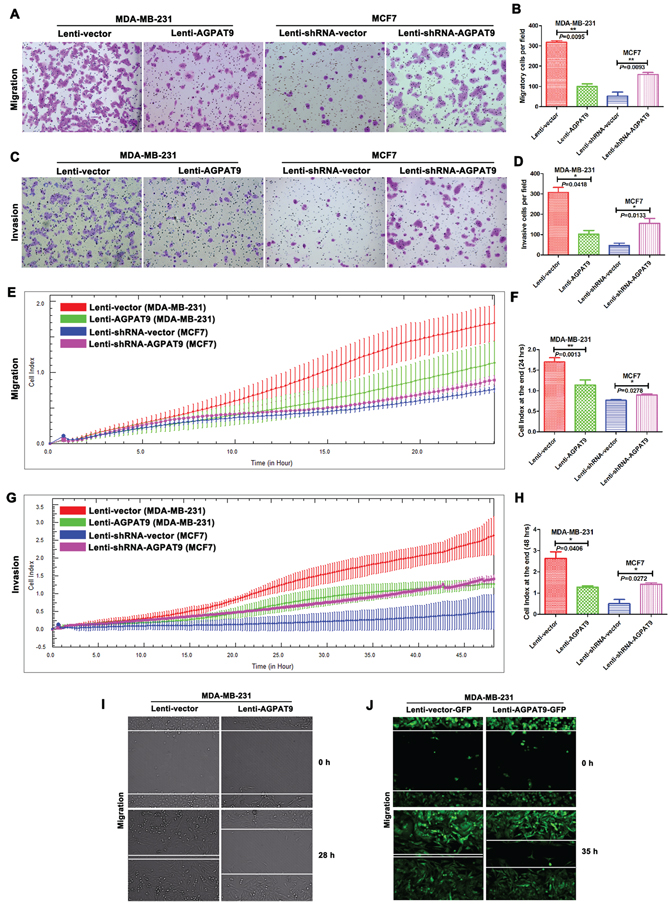 AGPAT9 inhibited breast cancer cell migration and invasion.