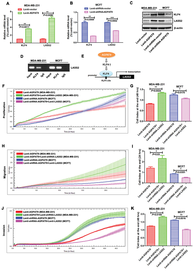 AGPAT9 overexpression resulted in increased expression of LASS2.