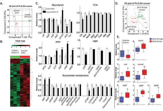 MUC16 alters glycolysis, PPP and nucleotide metabolism in both pancreatic cancer cells and MUC16 expressing tumors.