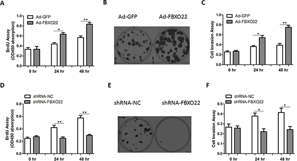 FBXO22 promotes HCC cell proliferation and invasion.