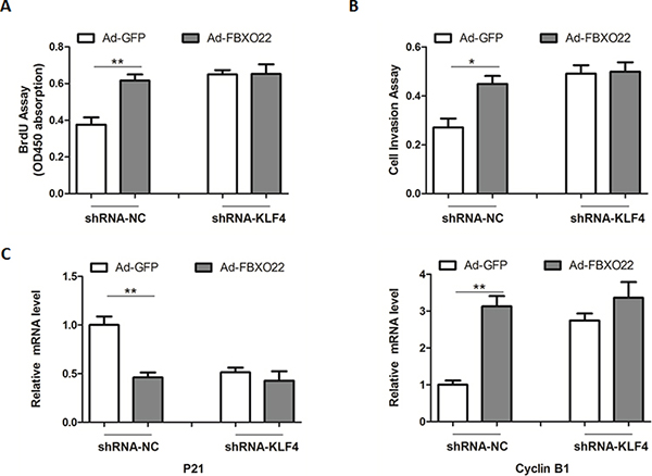 The oncogenic roles of FBXO22 rely on its regulation of KLF4.