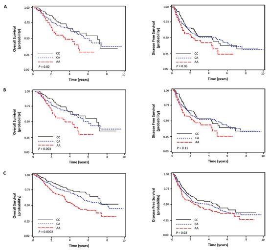 Kaplan-Meier plot of overall and disease free survival curves according to ERCC1 rs2298881C > A genotype in discovery cohort.