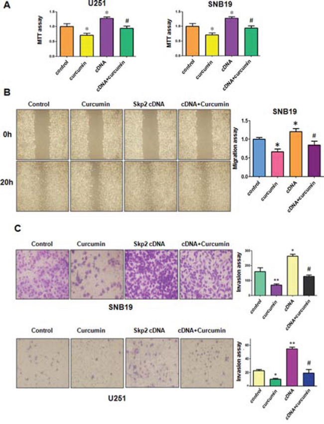 The effect of Skp2 overexpression on cell growth, migration and invasion.