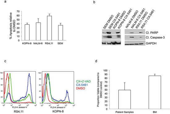 CX-5461 induces caspase dependent apoptosis in ALL cells.