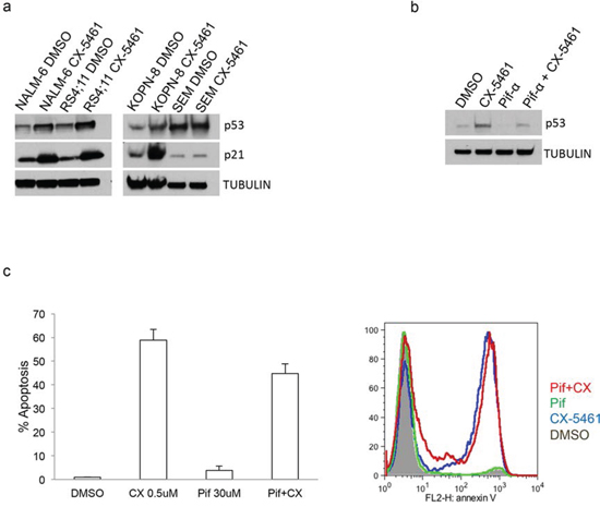 CX-5461 mediated apoptosis is p53 independent.
