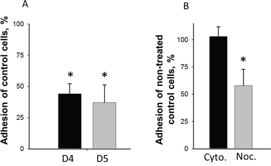 Effect of DIAPH1-depletion and inhibition of cytoskeletal dynamics on adhesion of non-stimulated HCT-116 cells.