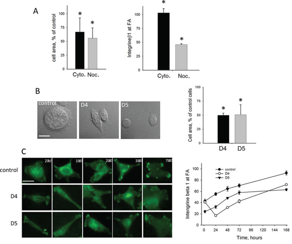 Effects of DIAPH1-depletion in HCT-116 cells on cytoskeletal dynamics, cell spreading and formation of focal adhesions Fas.