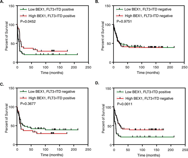 Overall survival of AML patients with higher and lower BEX1 expression.