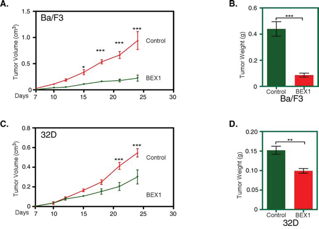BEX1 delayed tumor growth in mouse xenograft.