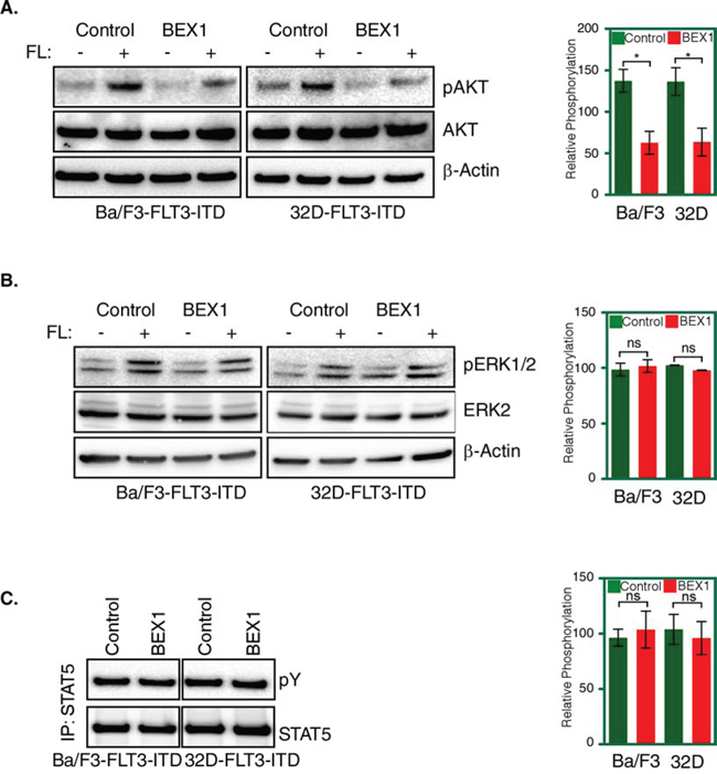 BEX1 expression decreased AKT phosphorylation.