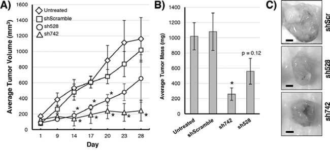 Growth of MIAPaCa-2 tumors over 28 days in nude mice.