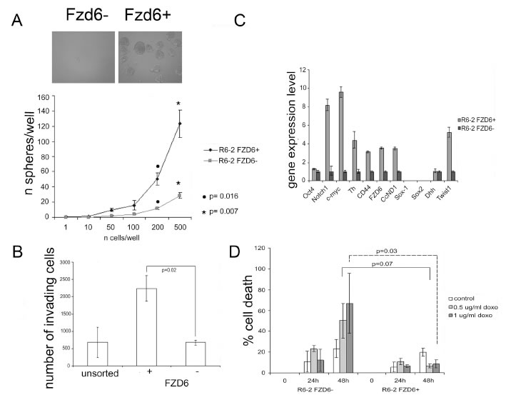 Fzd6 expressing cells display biological features of cancer stem cells.