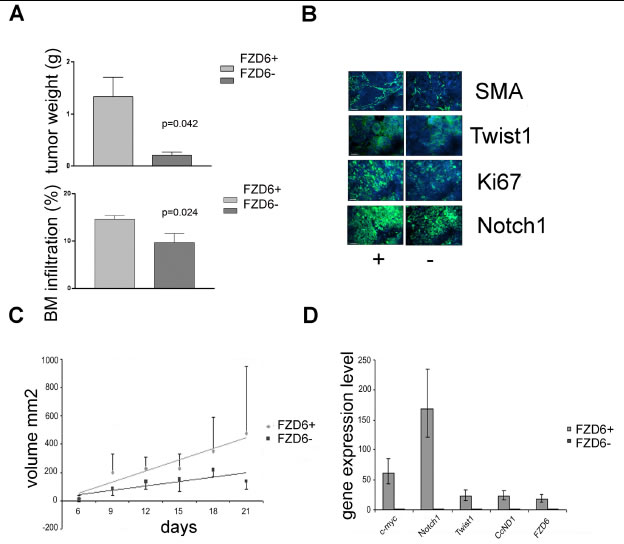 Fzd6 expression is associated with aggressive growth in vivo.