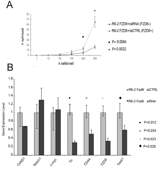 RNAi downregulation of Fzd6 inhibits neurospheres formation and expression of Wnt target genes.