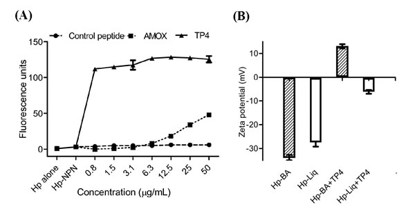 TP4 induces membrane permeation of
