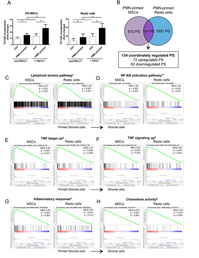 Neutrophils induce a specific B-cell supportive inflammatory profile in stromal cells.