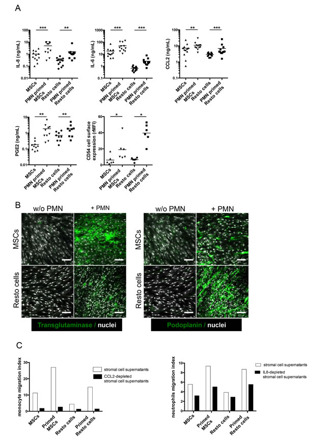 Functional validation of the inflammatory lymphoid stroma phenotype triggered by neutrophils in stromal cells.