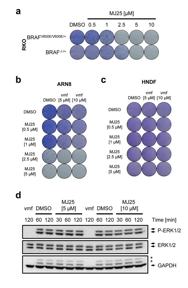 MJ25's cytotoxic effect is enhanced by mutant BRAF.