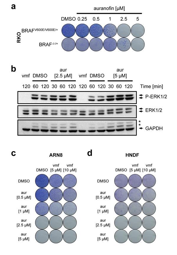 Auranofin's cytotoxic effect in relation to mutant BRAF.
