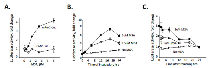 Selenium specifically activates circadian promoter in a time and dose-dependent manner.