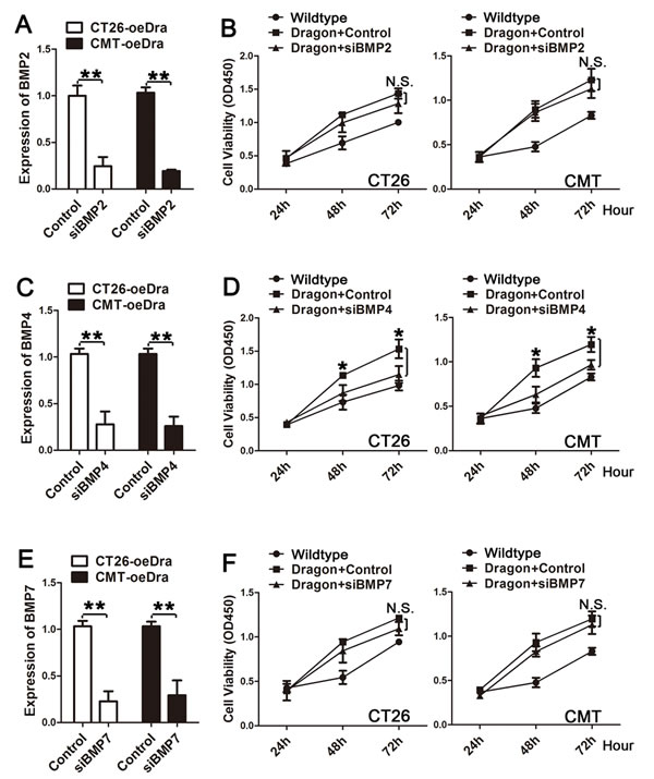 Effects of inhibition of BMP2, BMP4 or BMP7 expression on colon cancer cell proliferation induced by Dragon.