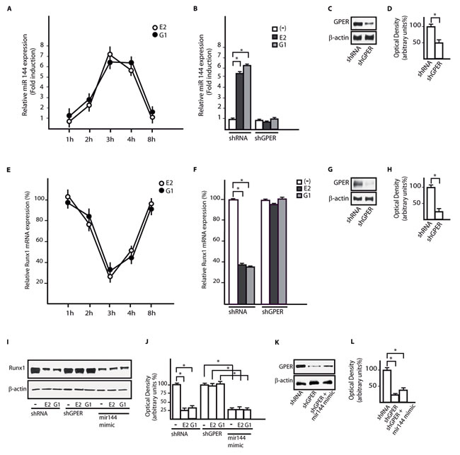 GPER mediates the up-regulation of miR144 and the reduction of Runx1 induced by E2 and G-1 in CAFs.