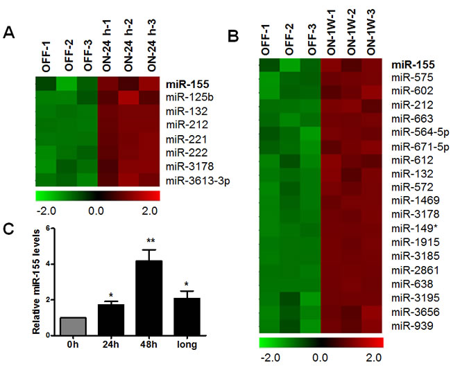 Increase of miR-155 expression after K-Ras activation in T-Rex/K-Ras cells.